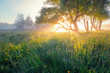 Leinwandbild Motiv Summer background. Summer nature early in the morning. Colorful mist in morning sunlight over meadow. Sun shines through tree on wild flowers.