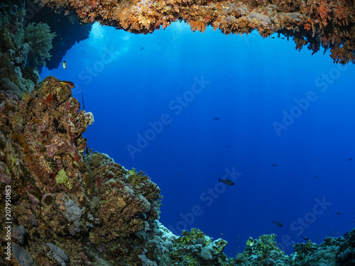 Coral growth on an underwater cave