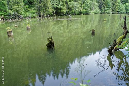 Fotobehang Olijf Road trip true the wonderful nature and landscape of Romania