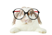 Beautiful Rabbit With Glasses ...