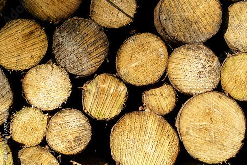 Recess Fitting Firewood texture Baumstämme