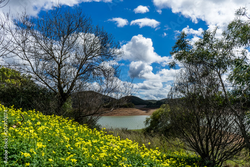 Fotobehang Grijze traf. Landscape with yellow flowers in front of a small lake underneath a cloudy blue sky surrounded by trees