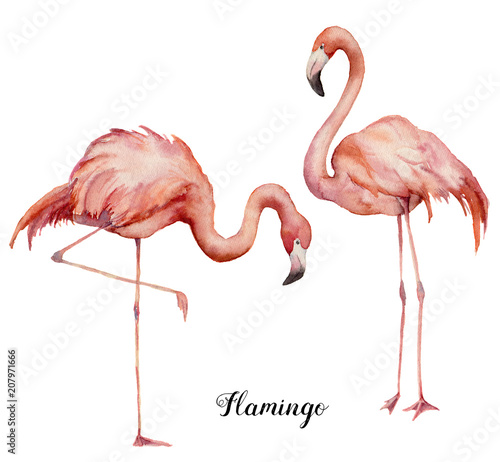 Garden Poster Flamingo Watercolor two pink flamingo set. Hand painted bright exotic birds isolated on white background. Wild life illustration for design, print, fabric or background.