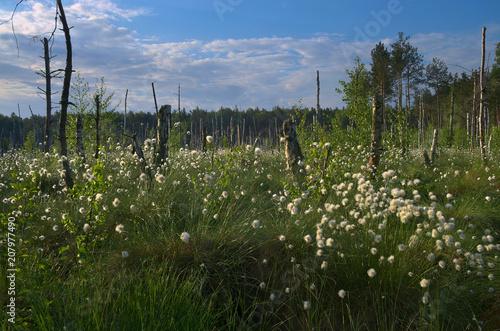 Krajobraz Polesia - 207977490