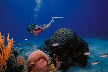 St Croix Diver