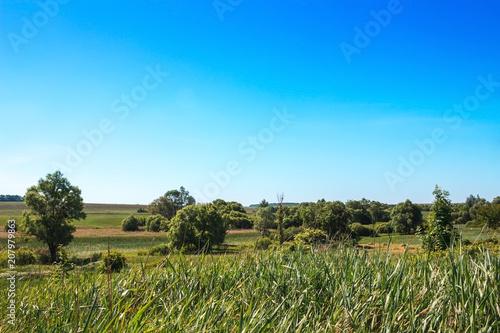 Summer landscape sky, trees, field, bush country scene