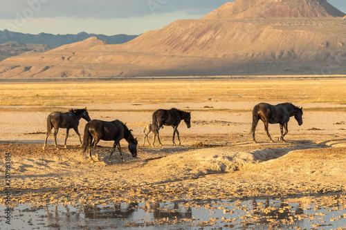 Herd of wild Horses in the Utah Desert in Summer Poster