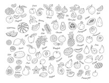 Fruit Icon, Hand-drawn Set Of ...