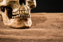 Human Skull Detail
