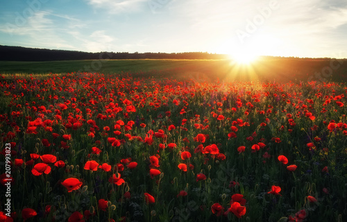 Canvas Prints Poppy Field with red poppies, colorful flowers against the sunset sky