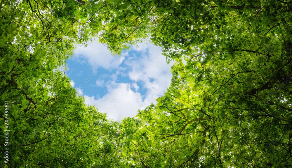 Fototapeta Green leaves background, blue sky heart shape cloud ecology concept idea eco love symbol background abstract