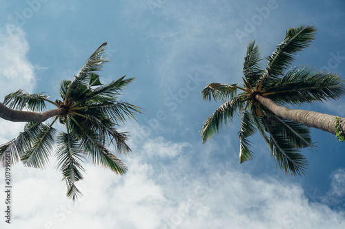 Keuken foto achterwand Tropical strand Two palm trees