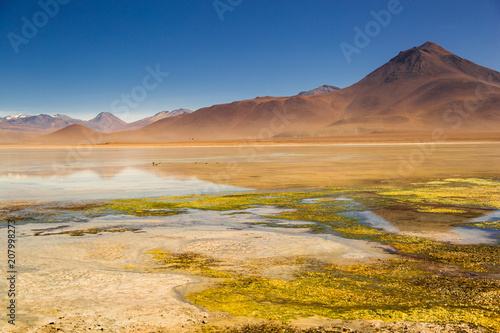 Foto op Plexiglas Honing stunning colorful lagoon with a volcano and a blue sky | Altiplano, Bolivia