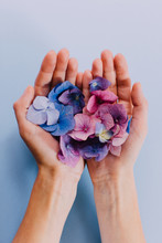 Woman's Hands Holding A Scatte...