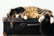 Cat Relaxing On Vintage Suitac...