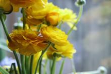 Bunch Of Yellow Ranunculus