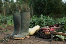 Green Boots Next To Fresh Organic Vegetables In The Garden
