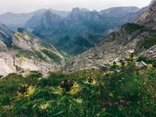 Wild Flowers In Switzerland's ...