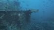 shoal of Jacks feeding on shoal of bait fish