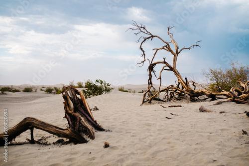 Death Valley tress
