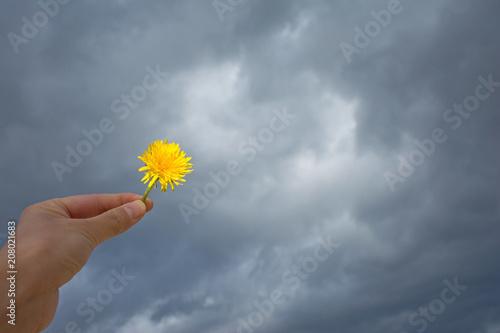 希望のイメージ   曇天 たんぽぽ  Poster