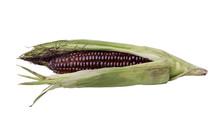 Red Corn On White Background, Ingredient Organic Food