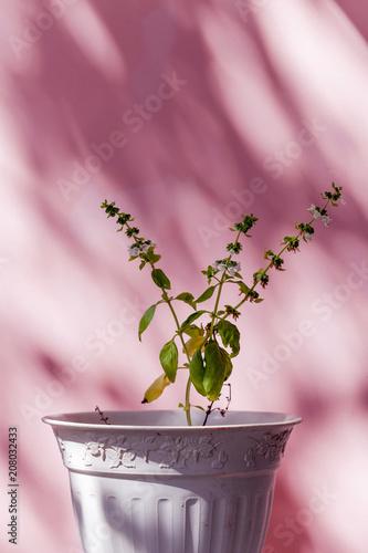 Foto op Canvas Planten Green Plant Pink Wall