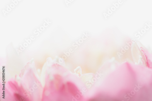 Foto op Aluminium Lotusbloem Sweet color lotus in soft style for background