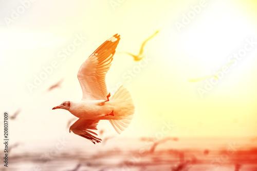 Fototapeta Seagulls are flying over the sea in the orange sunset sky obraz na płótnie