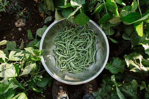 A metal bowl full of green beans in a garden.