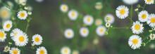Summer Wildflowers Background....