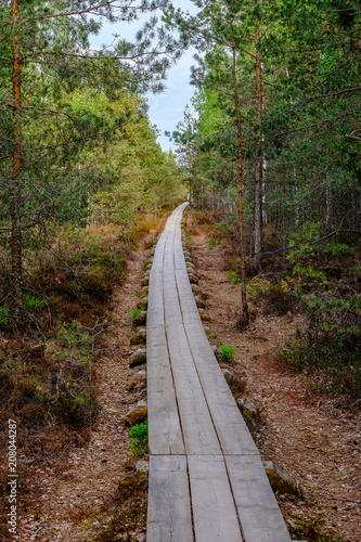 Fotobehang Diepbruine wooden boardwalk in bog swamp area
