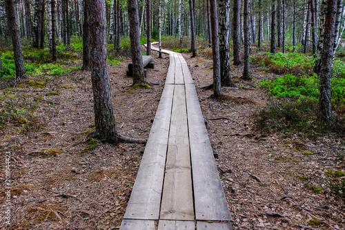 Foto op Plexiglas Cappuccino wooden boardwalk in bog swamp area