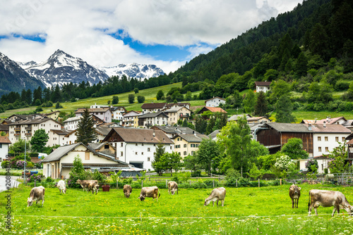 Fotografie, Obraz  Cow pasture and Alps in background of Mustair village,Switzerland