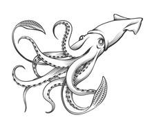 Giant Squid Engraving Illustra...