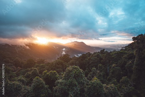 Poster Oceanië Rainforest of Dorrigo National Park, New South Wales, Australia