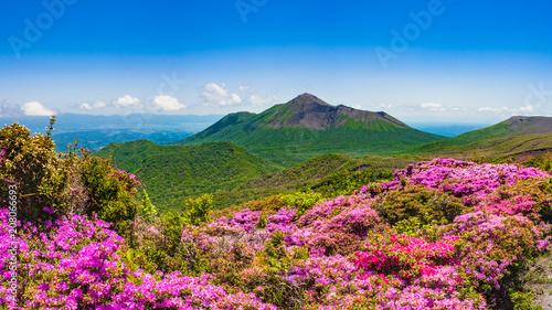 Canvas Prints Azalea 満開のミヤマキリシマと新緑 霧島の山