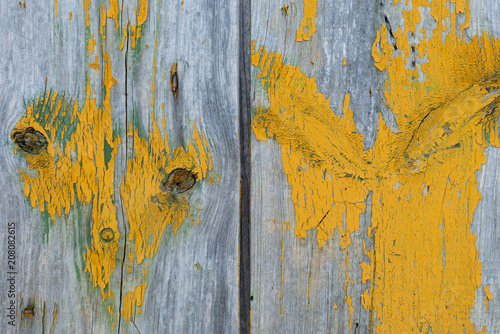 Garden Poster Floral Wooden texture with scratches and cracks
