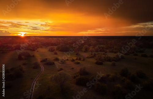 Fototapeta Sunset, aerial, atmospheric view on curving sandy path, Moremi forest, Botswana