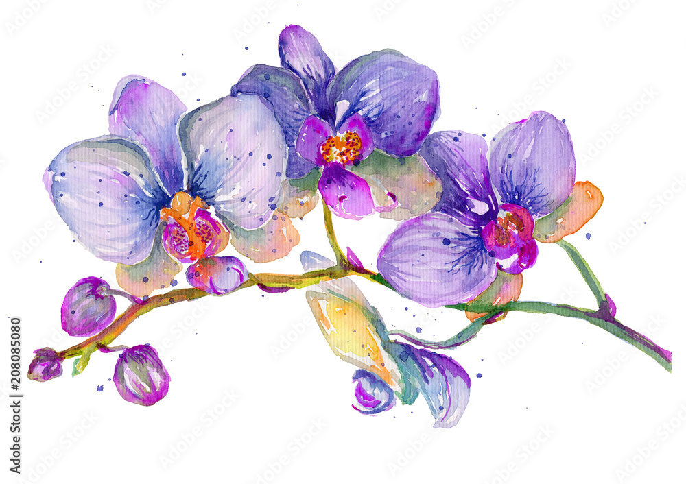 Fototapety, obrazy: Watercolor orchid branch on a white background.