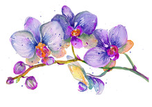 Watercolor Orchid Branch On A ...