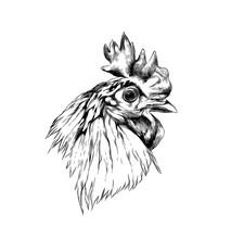 Cock Head In Profile, Sketch V...