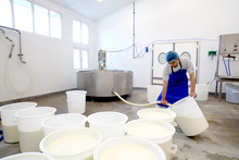 Cheese Maker Filling Large Con...