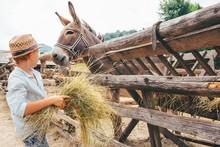 Boy Helps On Farm - Feeds A Do...