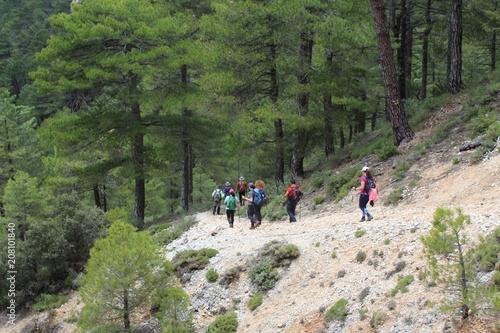 Tuinposter Weg in bos Descenso vertiginoso