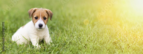 Fotografia Website banner of a happy dog puppy as sitting in the grass