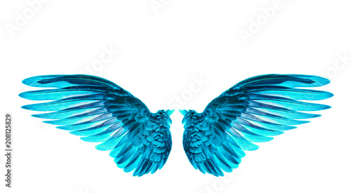 Foto  blue wings of bird on white background