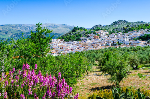 Foto op Aluminium Groene White town of Montejaque, Andalusia, Spain