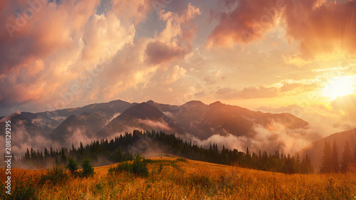 Keuken foto achterwand Rood paars Foggy morning shiny summer landscape with mist, golden meadow and sun shining