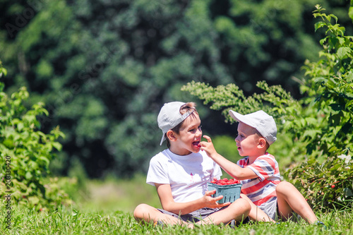 Photo  kids eat raspberries on a farm